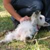 Przewrócenie psa na plecy w ramach kary za zachęcanie do rzucania patyka jest najgłupszym, co może zrobić opiekun.