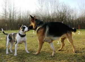 Psy na wprost siebie