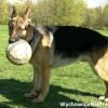 Pomóż psu przetrwać Euro 2012