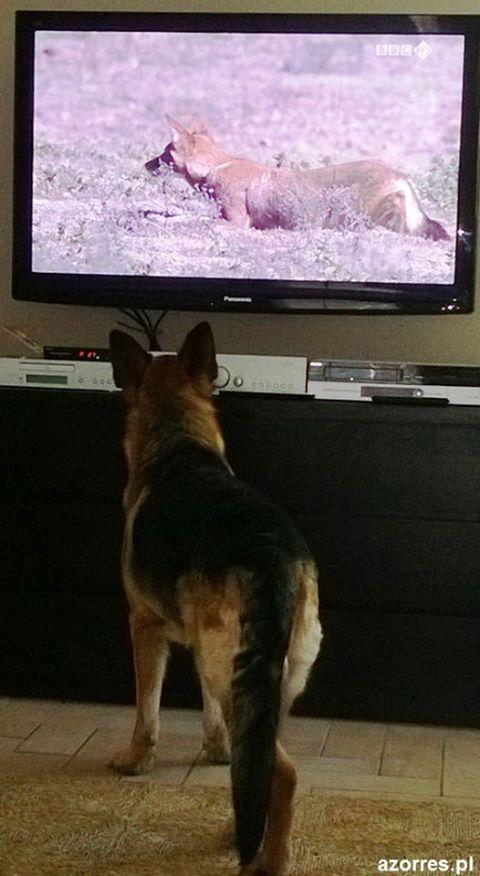 telewizja dla psów